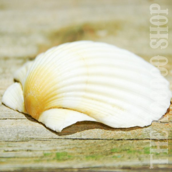 Räucherschale Shell